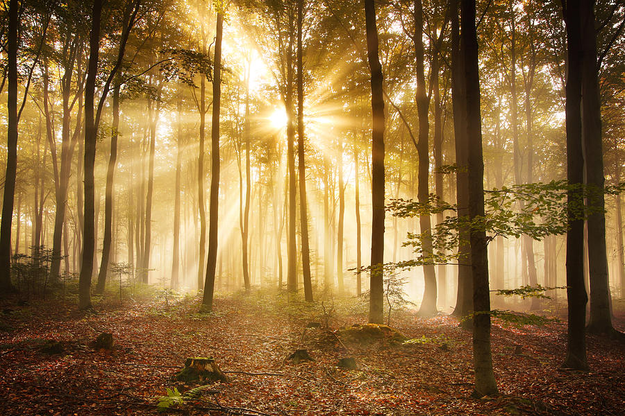 Foggy Autumn Forest Hdr Xxxl Image By Konradlew