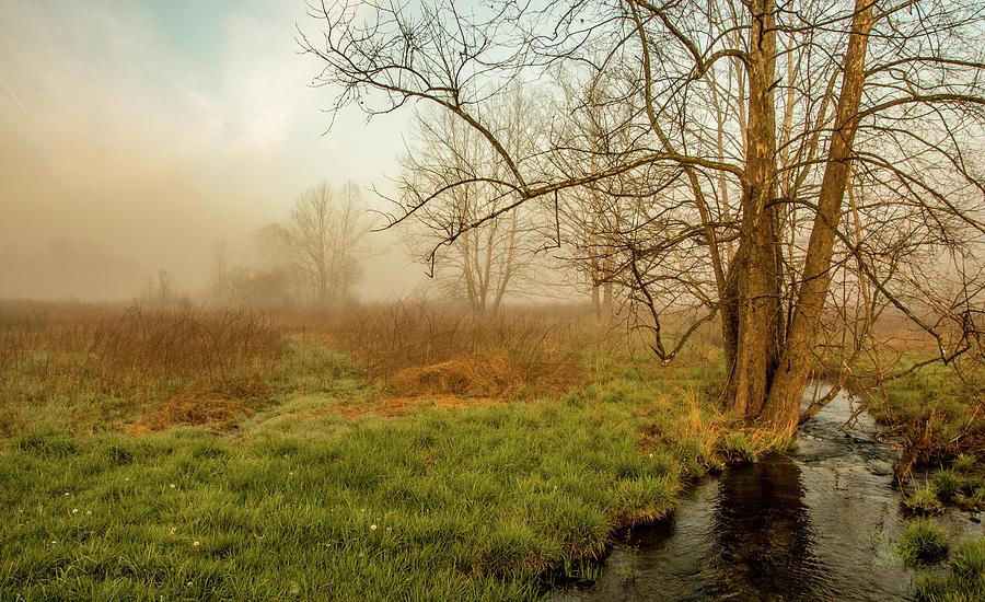 Foggy Creek by Marcy Wielfaert