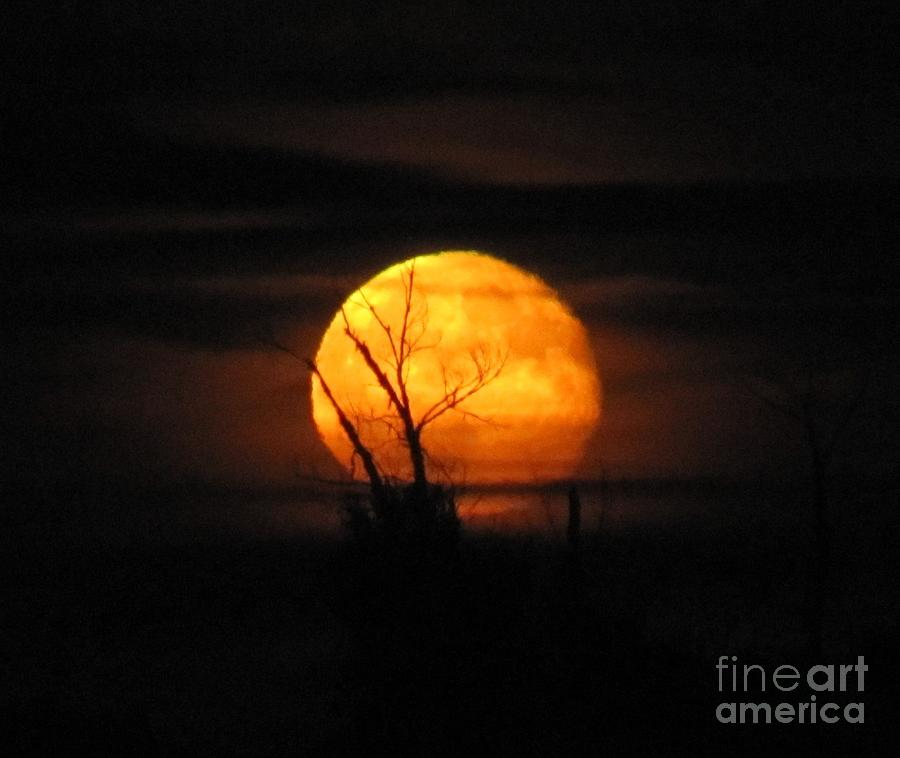 FOGGY HARVEST MOON by Barbara Henry