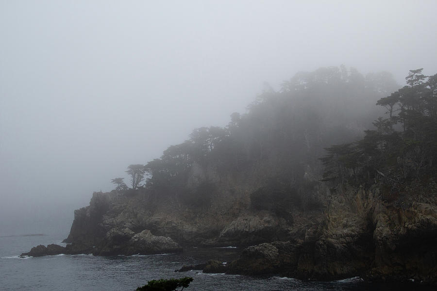 Foggy Morning at Point Lobos 1 by Marie Leslie