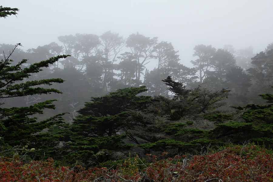 Foggy Morning at Point Lobos 2 by Marie Leslie