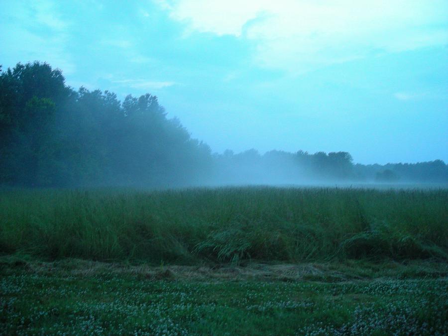 Foggy Morning Field Photograph