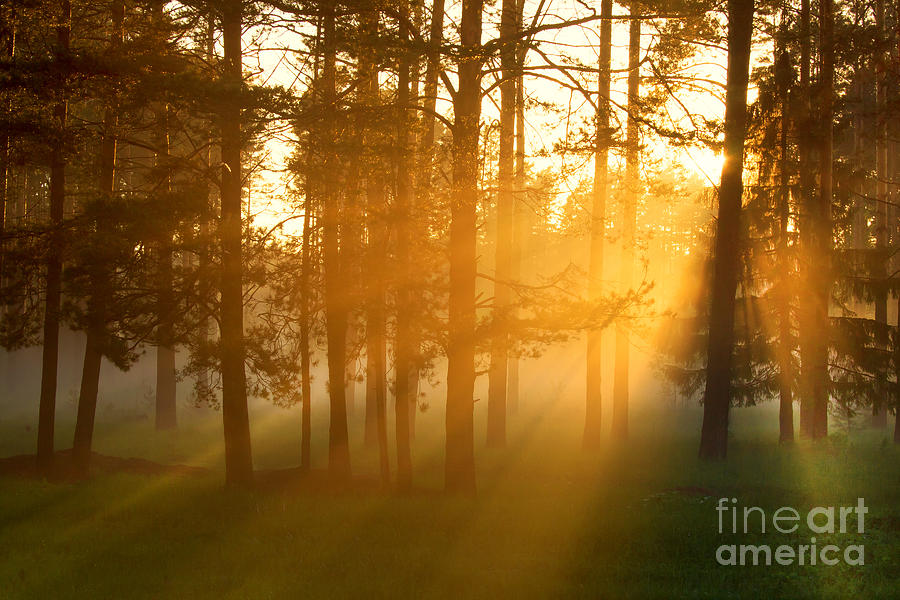 Magic Photograph - Foggy Morning In A Forest by Belkos
