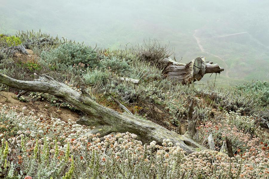 Foggy Morning Landscape by Bonnie Follett