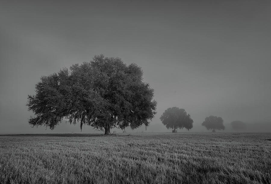 foggy morning oaks by Kenny Nobles