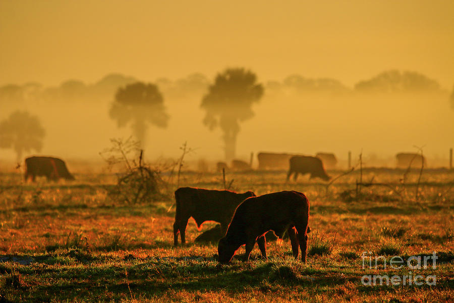 Foggy Morning Pasture by Tom Claud