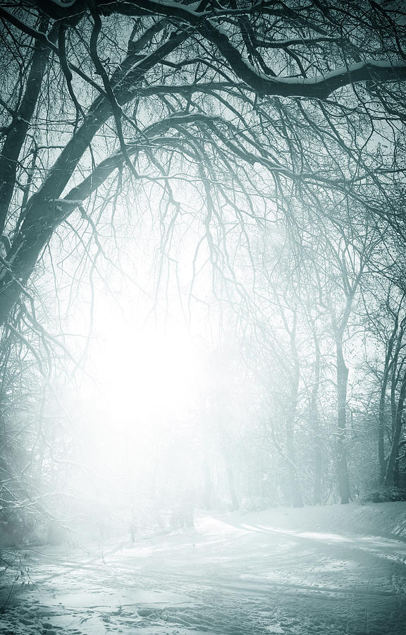 Foggy Old Trees Near The Road In Winter Photograph by Kamisoka