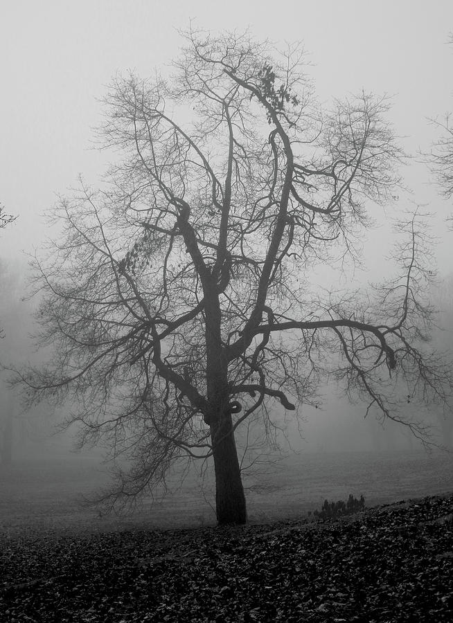 Foggy Tree in Black and White by William Selander