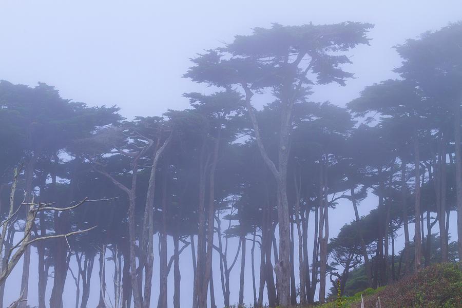 Foggy Trees at Lands End by Bonnie Follett