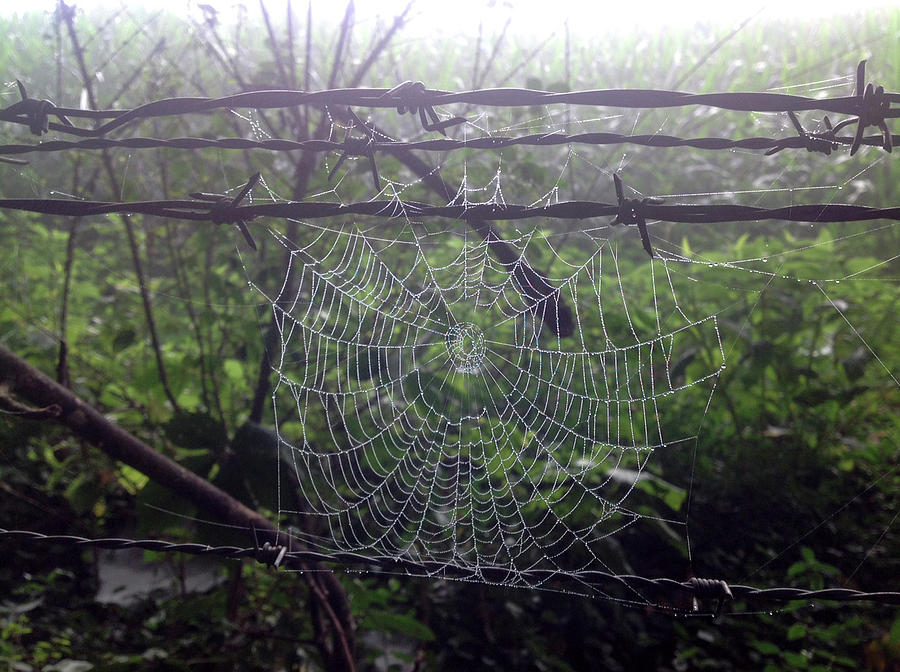 Spider Photograph - Foggy Web by Ericamaxine Price