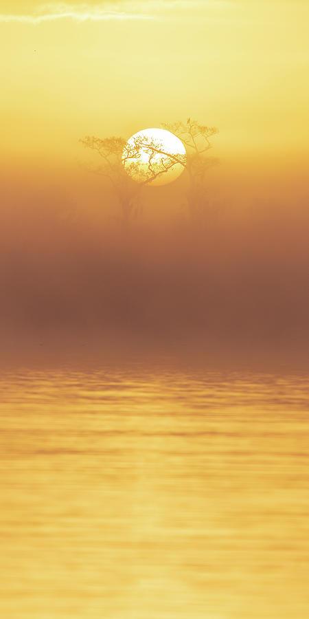 Foggy Wetlands Sunrise by Stefan Mazzola