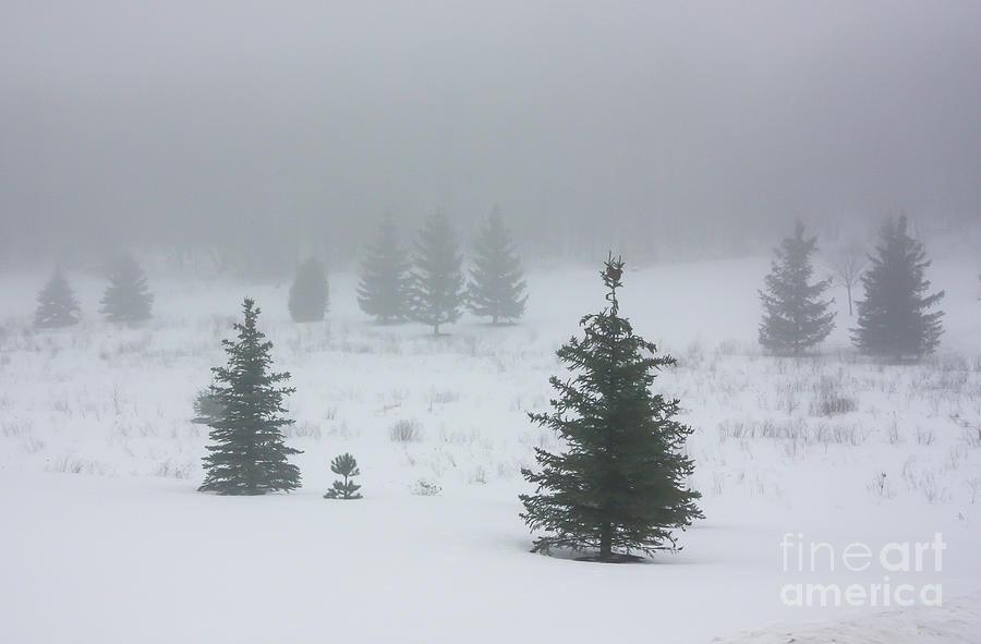 Snow Fog by Kevin McCarthy