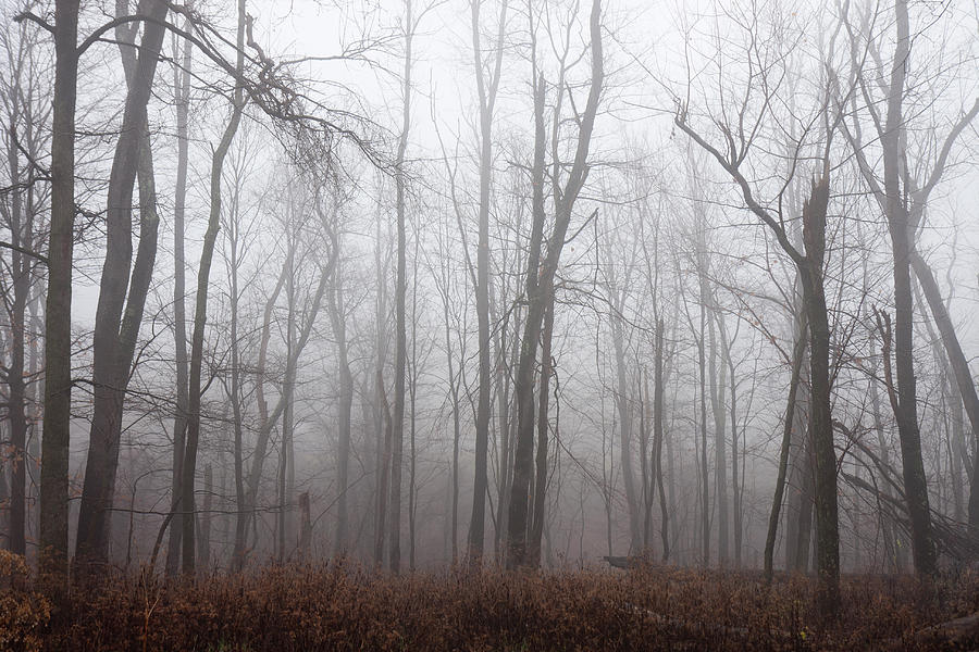 Foggy Woods Photograph by Njw1224