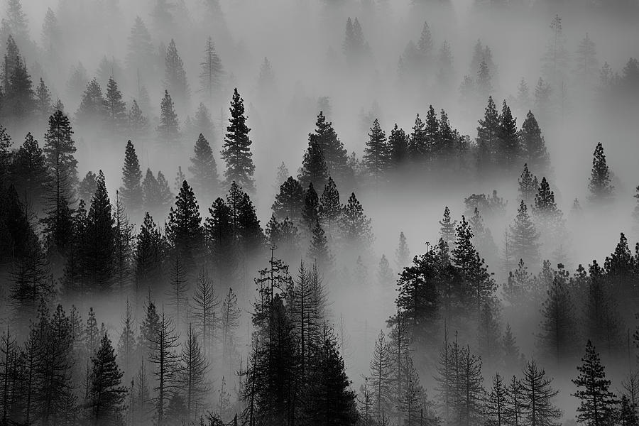 Foggy Yosemite II by Jon Glaser