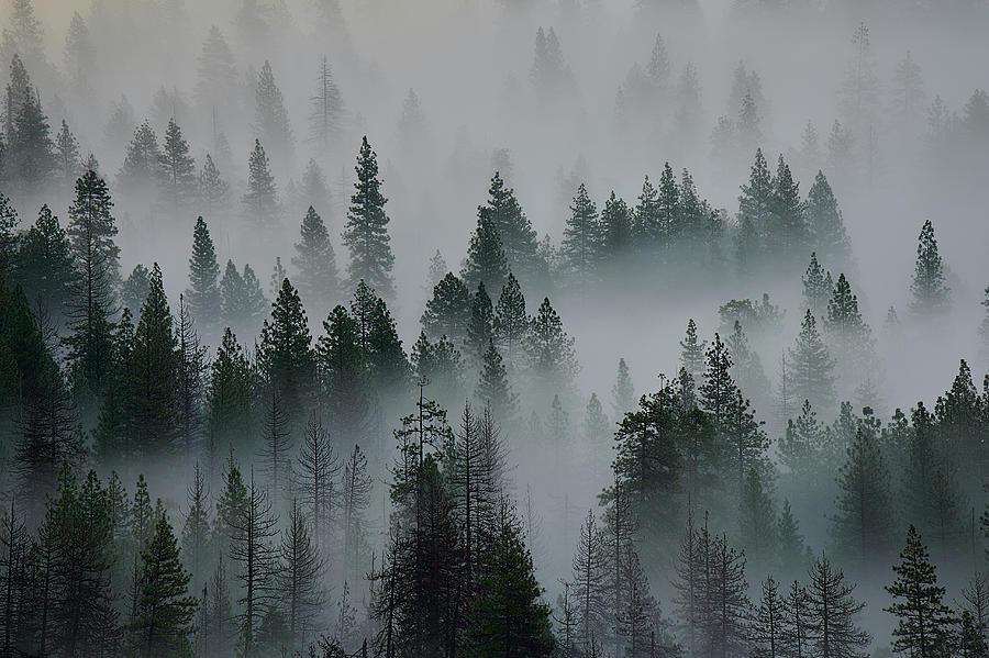 Foggy Yosemite by Jon Glaser