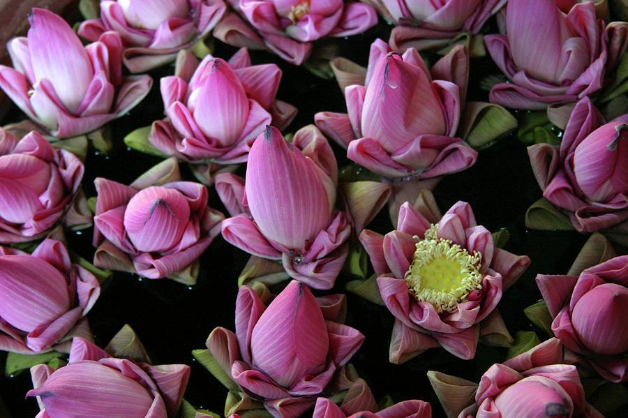 Folded Lotus Flowers, Siem Reap Photograph by James Gritz