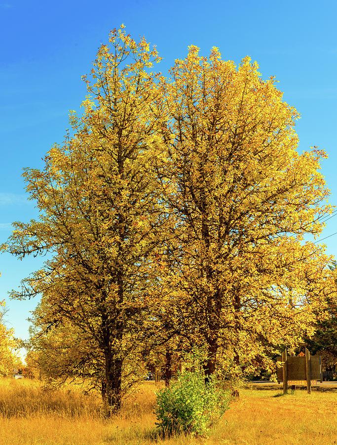 Landscape Photograph - Foliage by Dheeraj Mutha