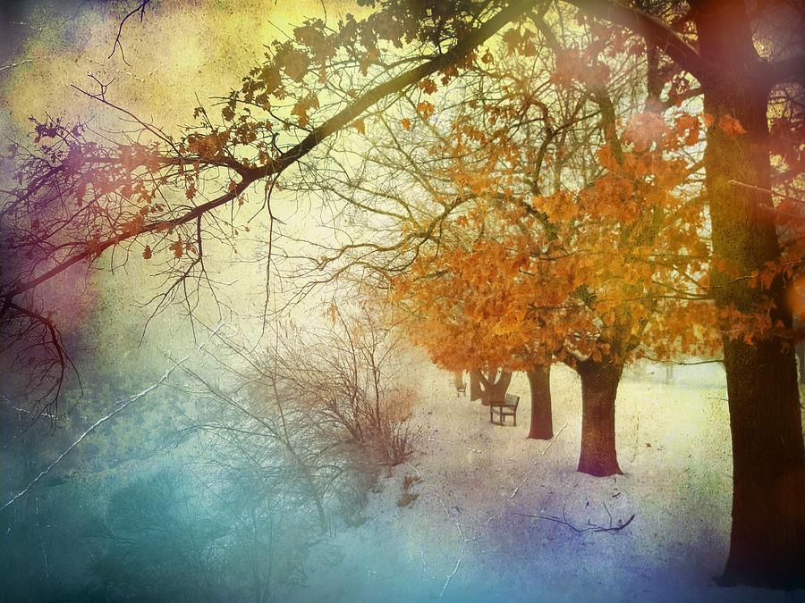 Tree Photograph - Follow Me Into The Dreams Of Trees by Tara Turner
