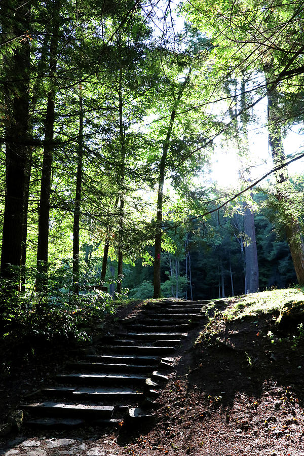 Follow The Light by Trina Ansel