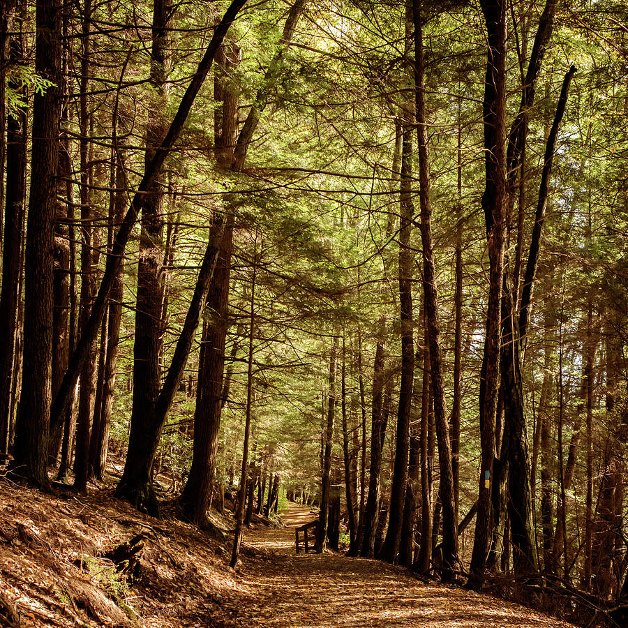 Follow The Path Cook Forest PA Square by Terry DeLuco