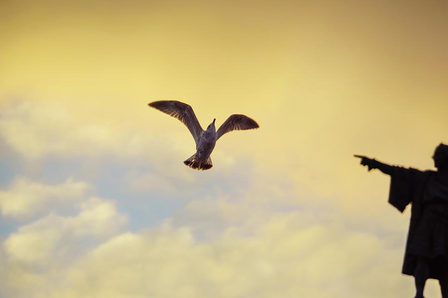 Follow This Bird -- Columbus Discovering America by Jonny Jelinek