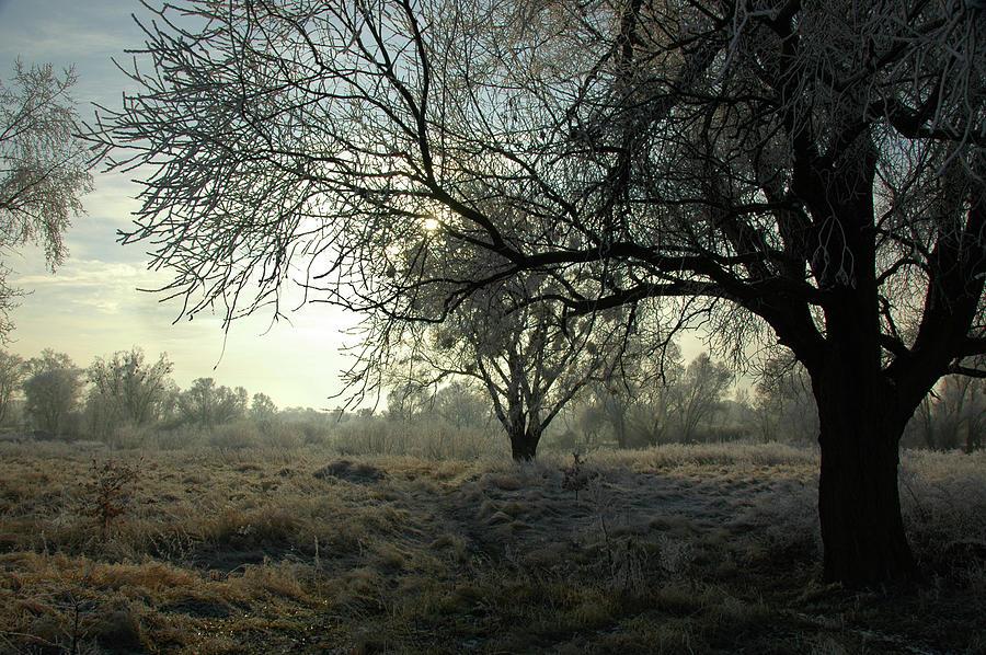 Winter Photograph - Following Old Masters by Jacek Stefan