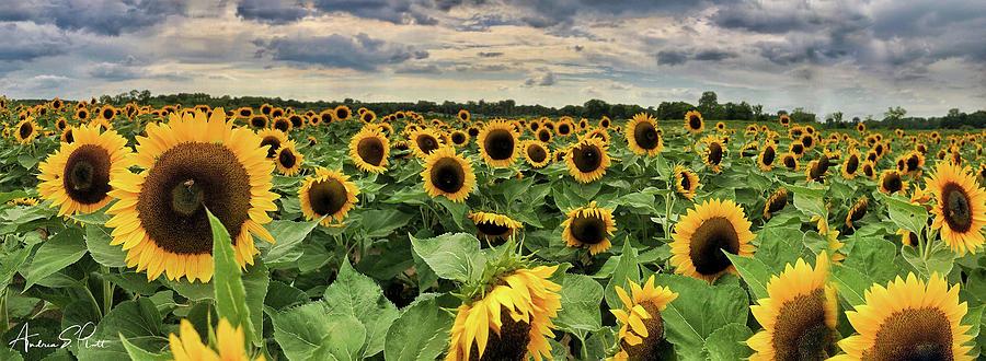 Following the Sun by Andrea Platt
