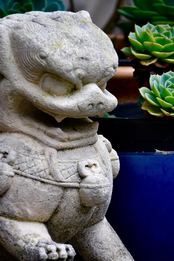 Foo Dog - Chinese Lion by Lehua Pekelo-Stearns