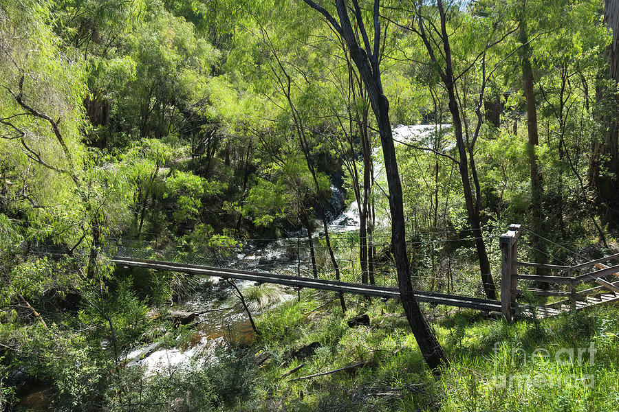 Footbridge at Beedelup Falls, Pemberton, Western Australia by Elaine Teague