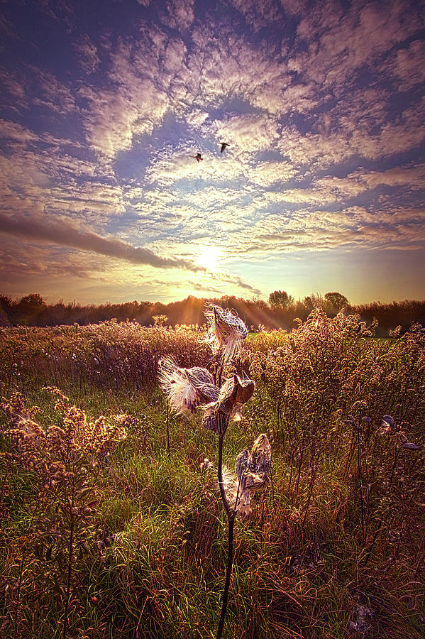 Life Photograph - For When I Am Weak, Then I Am Strong by Phil Koch