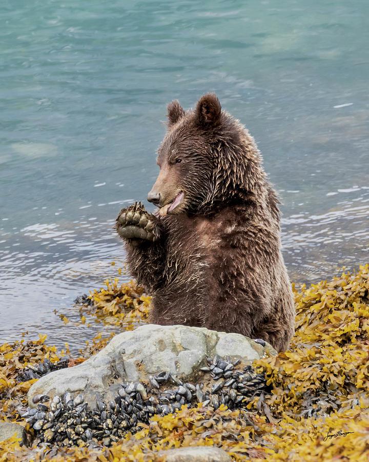 Foraging Brown Bear by Jurgen Lorenzen