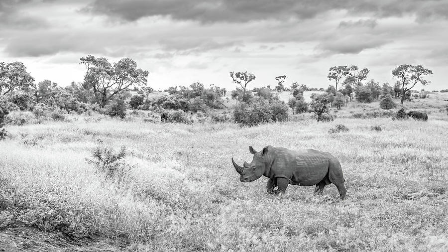 Rhino Photograph - Foreboding Skies by Hamish Mitchell