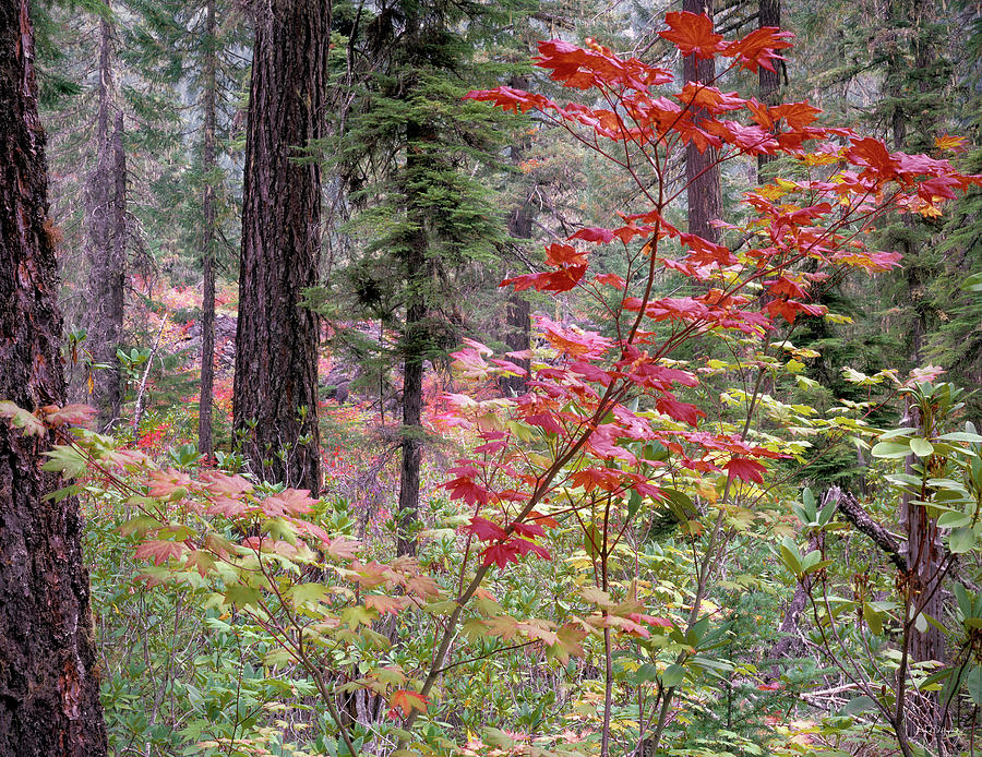 Autumn Photograph - Forest Autumn by Leland D Howard