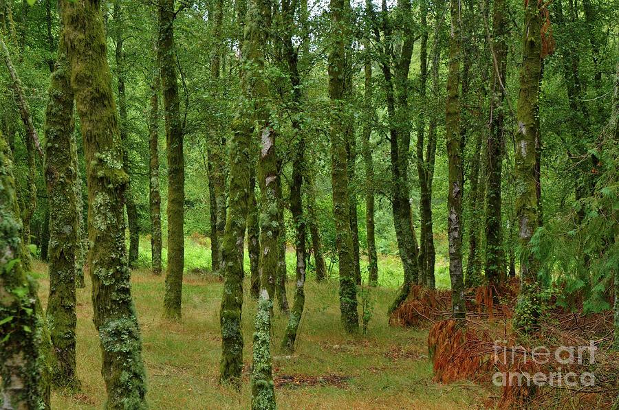 Mountain Photograph - Forest Background In Serra Da Gardunha by Angelo DeVal