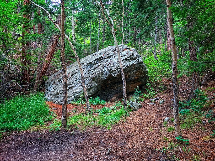 Forest Boulder by Dan Miller