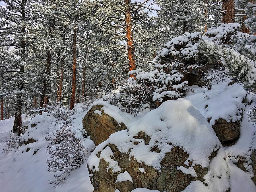 Forest Boulders by Dan Miller