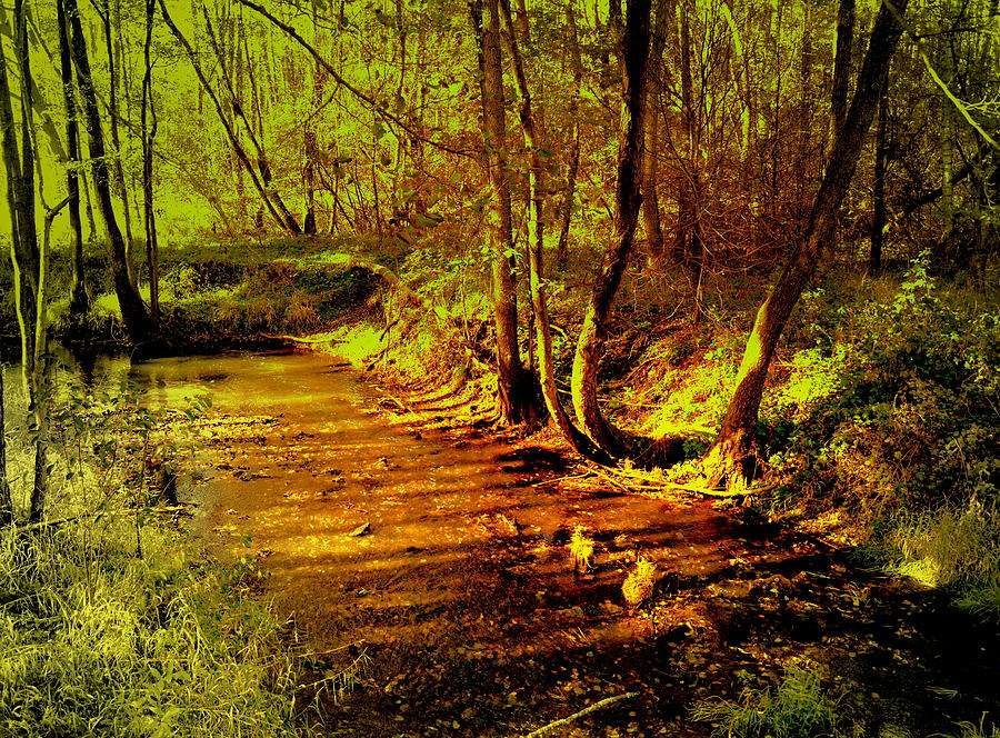 Forest brook in the morning sun by Henryk Gorecki