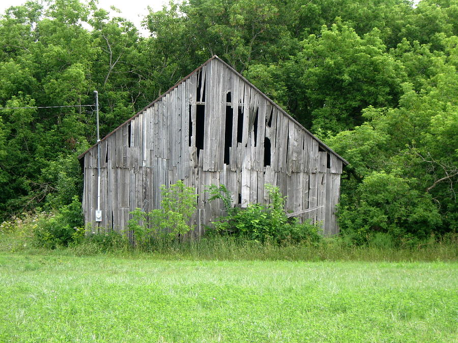 Forest Eating Barn by Richard Stanford