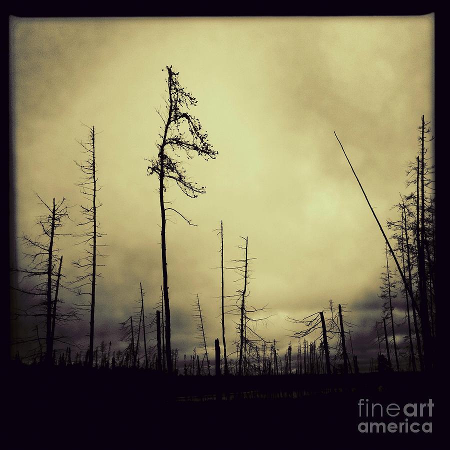 Forest Fire by RicharD Murphy