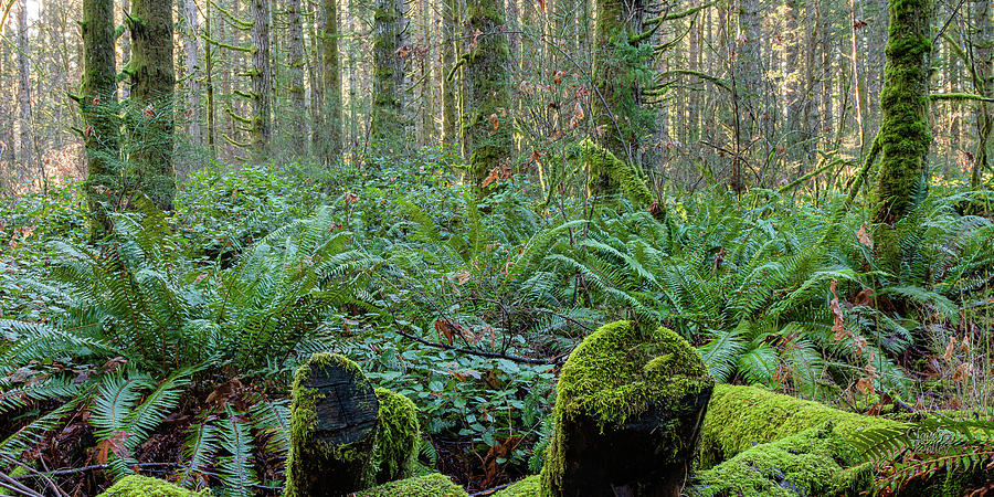 Forest Floor by Claude Dalley