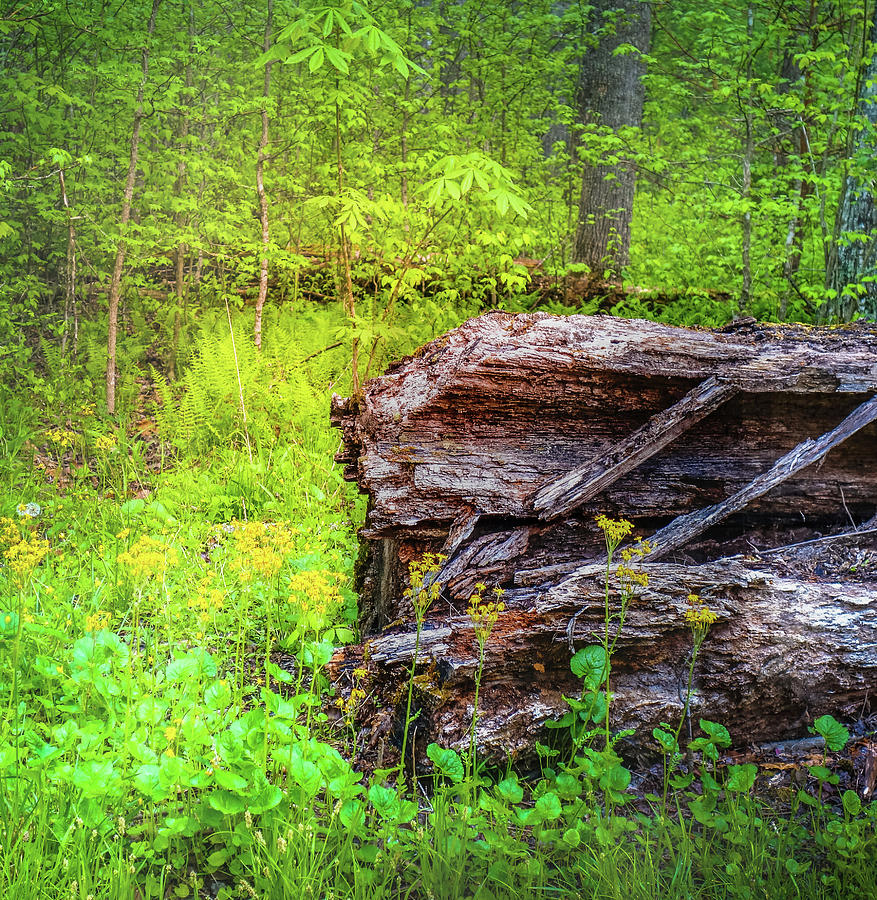 Forest Floor In Spring by Dan Sproul
