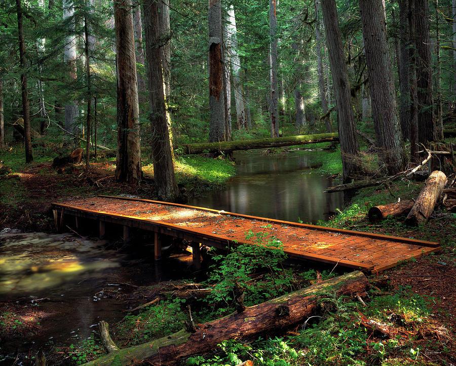 Idaho Photograph - Forest Foot Bridge by Leland D Howard