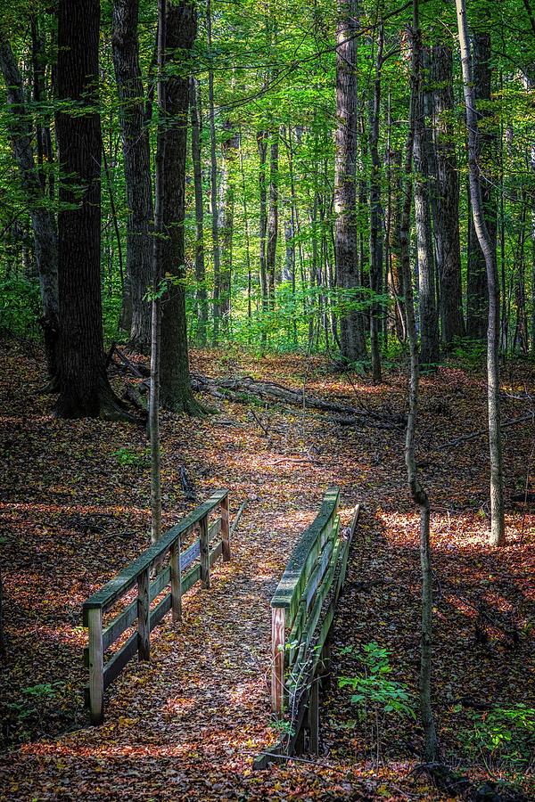 Dawes Photograph - Forest Footbridge by Tom Mc Nemar