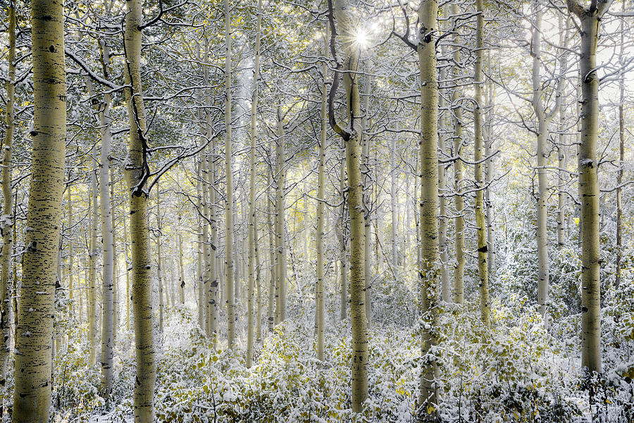 Aspen Forest Photograph - Forest Glow by Leland D Howard