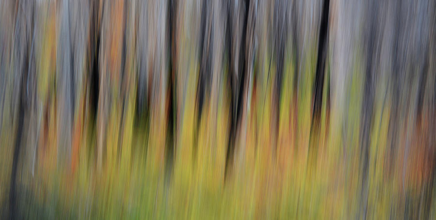 Forest Illusions- Rebirth of a Forest by Whispering Peaks Photography