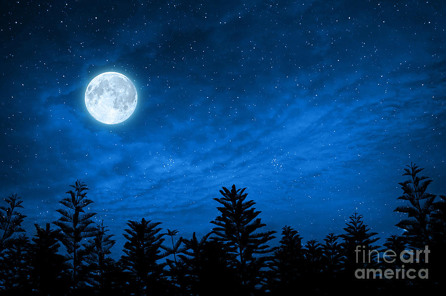 Magic Photograph - Forest In Silhouette With Starry Night by Ohishiapply
