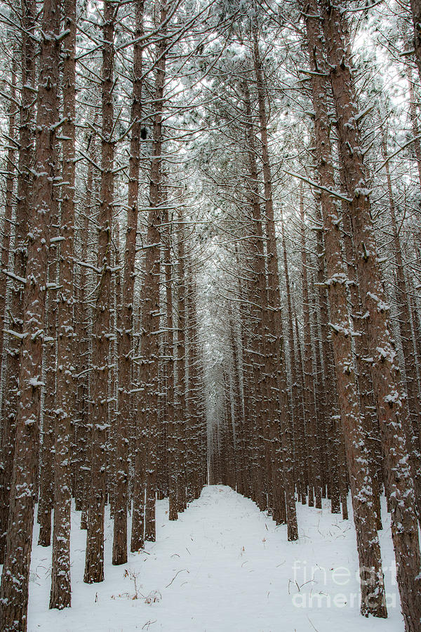 Sleeping Bear Dunes Photograph - Forest In Sleeping Bear Dunes In January by Twenty Two North Photography