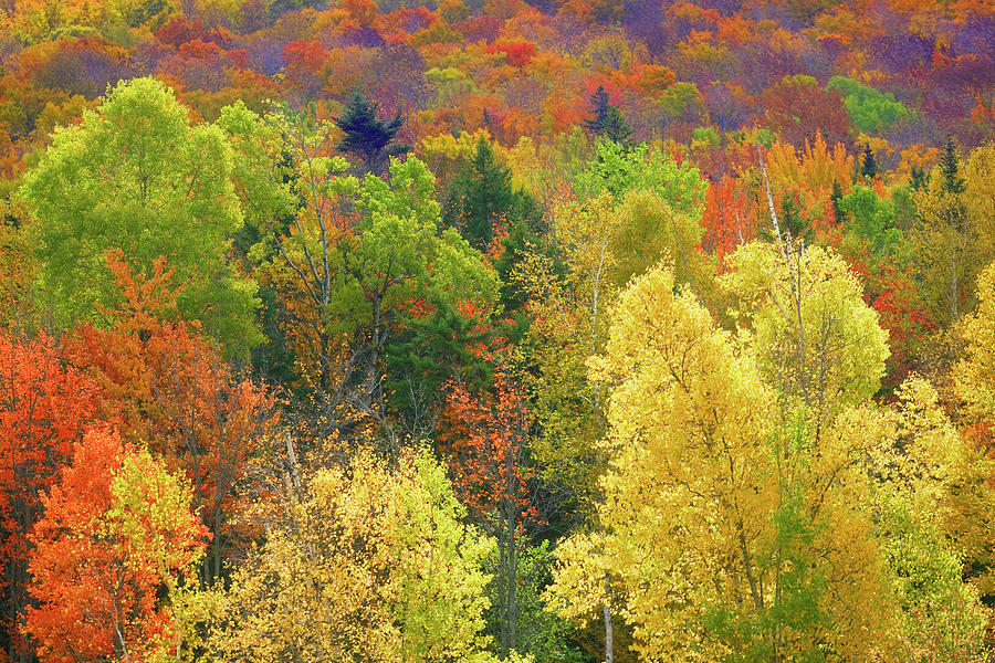 Forest In Vermont During Autumn Photograph by Visions Of Our Land