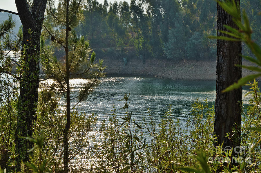 Forest Lake in Amendoa by Angelo DeVal