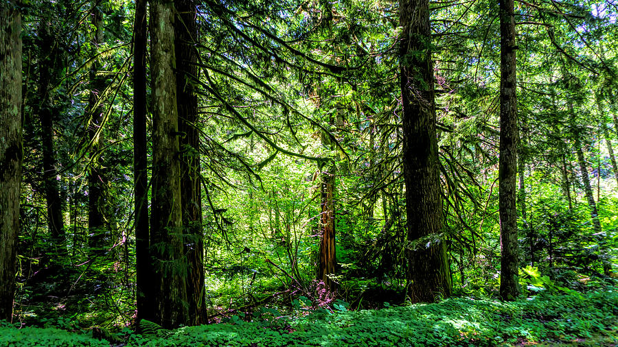 Forest Light and Shadow by Cathy Anderson